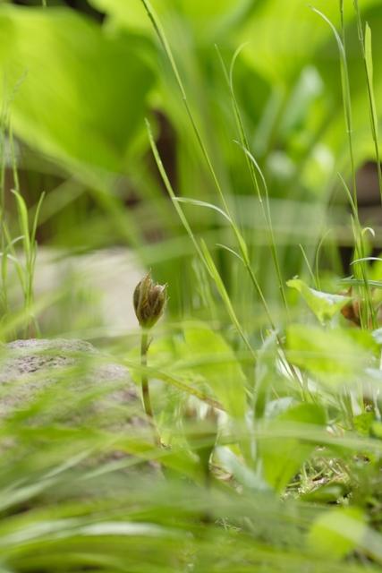 0504_MG_6183-s.JPG