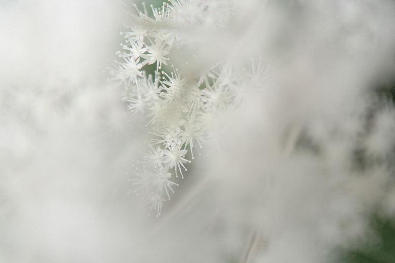 0620白い雲間に(白い花).JPG