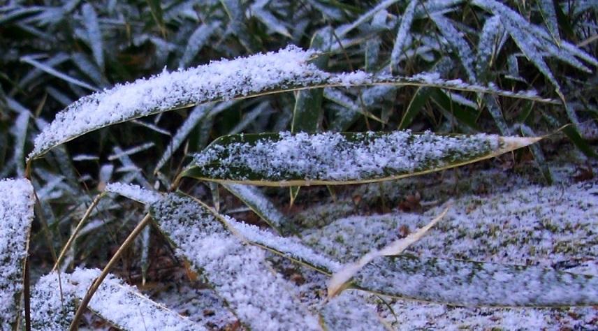 雪をどうぞ1.JPG
