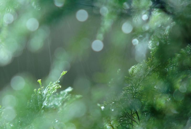 雨がふる-ss.JPG