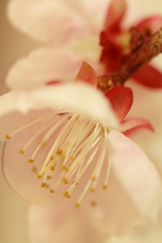 桜たて.JPG