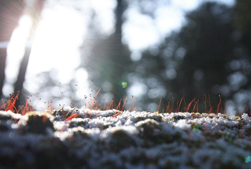 雪と戯れる.JPG