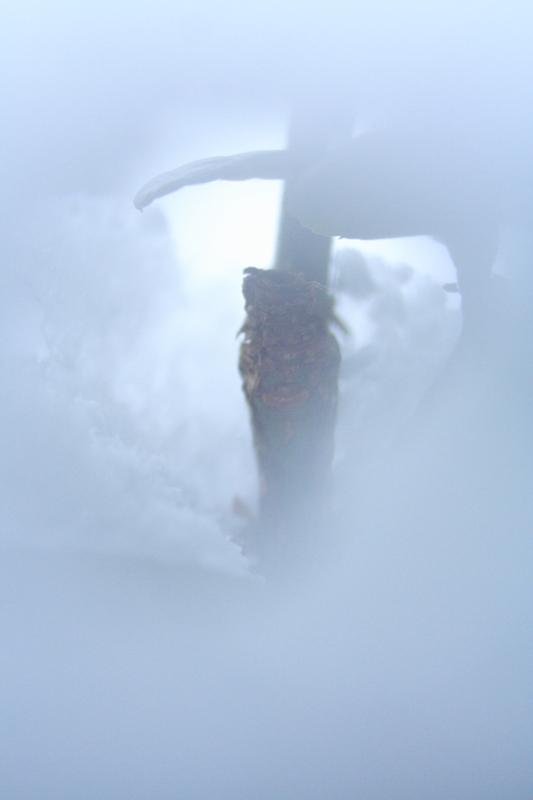 雪の中の小さな世界_MG_1302.JPG